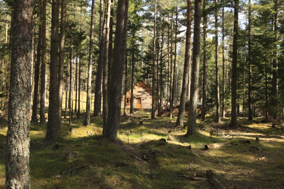 pine-marten-gallery1